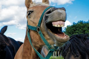From 'the Horse's Mouth': What Editor Feedback Can Teach You