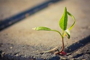 El emprendedor como semilla de innovación