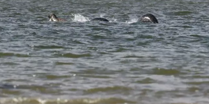 Does This Photo Prove the Loch Ness Monster Is Real?