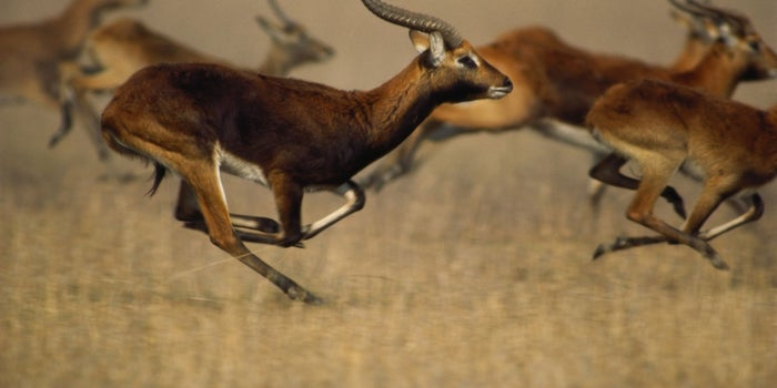The Second Slowest Gazelle: A Secret to Success