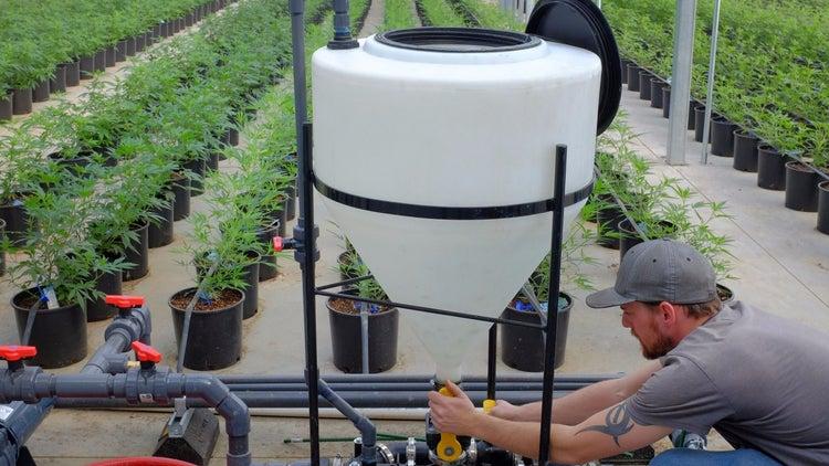 how to grow marijuana as a business