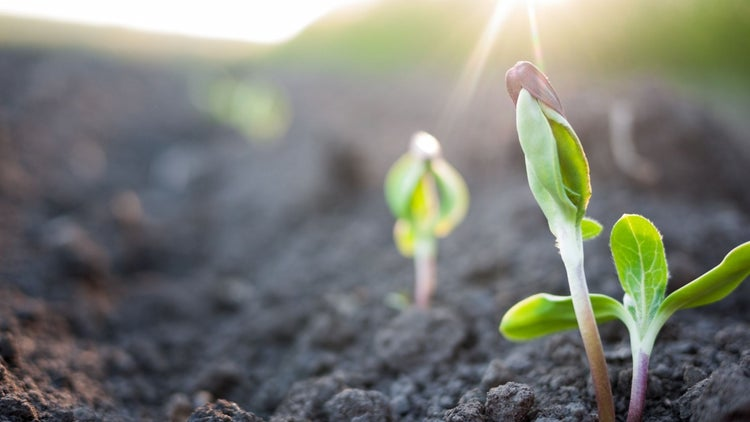 Emprendedores sustentables buscan capital semilla