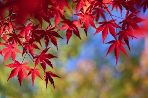 How the Seasons Affect Your Direct Mail Campaigns