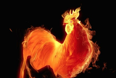 Take Your Inspiration for Success From the Fire Rooster