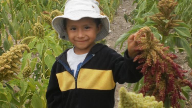 La emprendedora de amaranto que combate la desnutrición