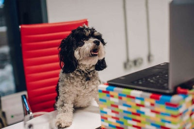 This Company Offers 'Paw-ternity' Leave to Employees