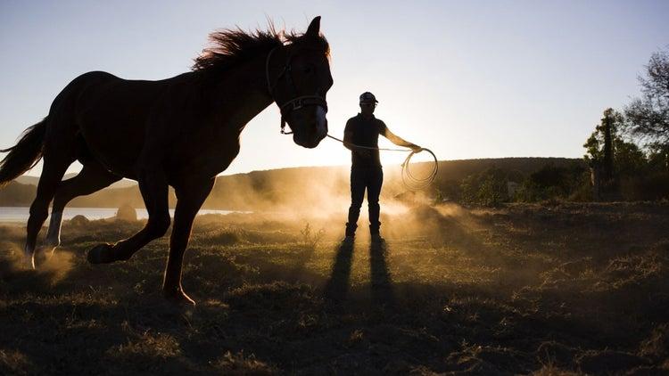 3 Entrepreneurial Lessons I Learned From Raising Horses