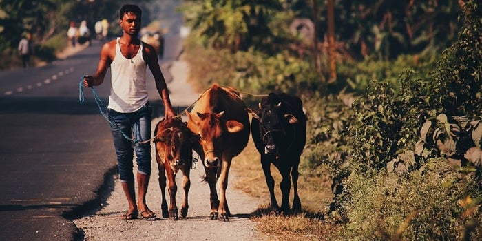 """""""Financial Literacy in Rural India Needs to Be Continuous and Adaptive"""""""