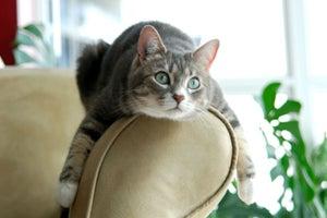 Las 6 ideas más locas para hacer negocios con los gatos