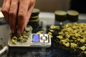 Oxford University Researchers to Explore the Potential Benefits of Medical Marijuana