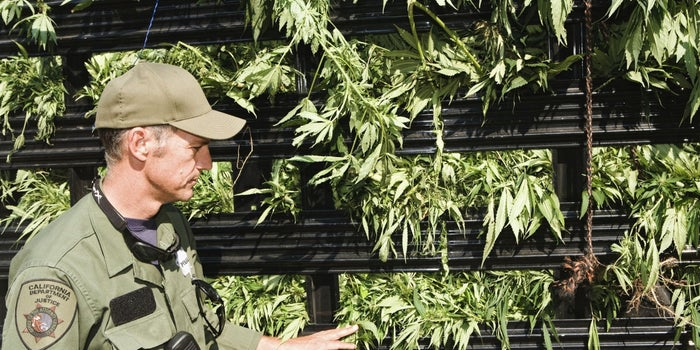 California Strikes Back: Proposed Law Bans Locals from Working with Feds on Pot Crackdown