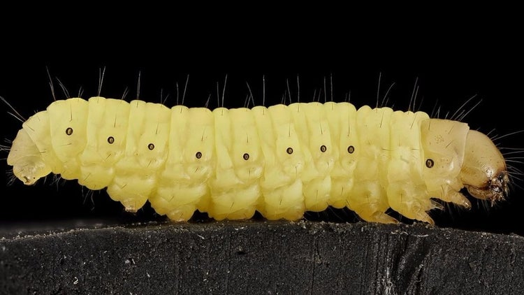 A Caterpillar May Solve Our Plastic Pollution Problem