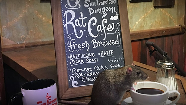 New Pop-up Restaurant Is a Rat Cafe That Features Real Rodents