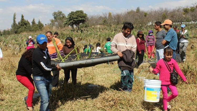 Los emprendedores que usan lombrices para limpiar el agua