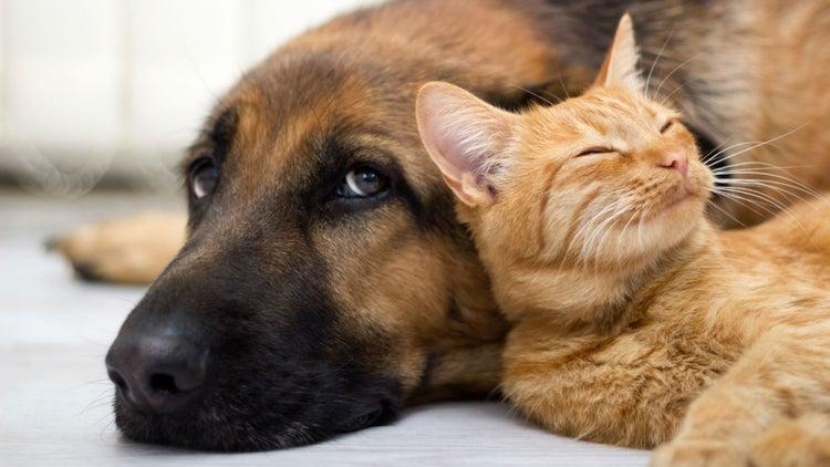 Petsy quiere ser la mejor opción omnicanal para mascotas