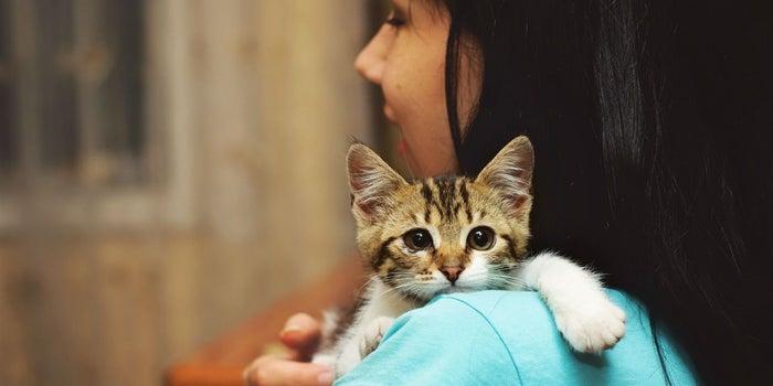 Una idea de negocio diferente: ¡masajes para mascotas!