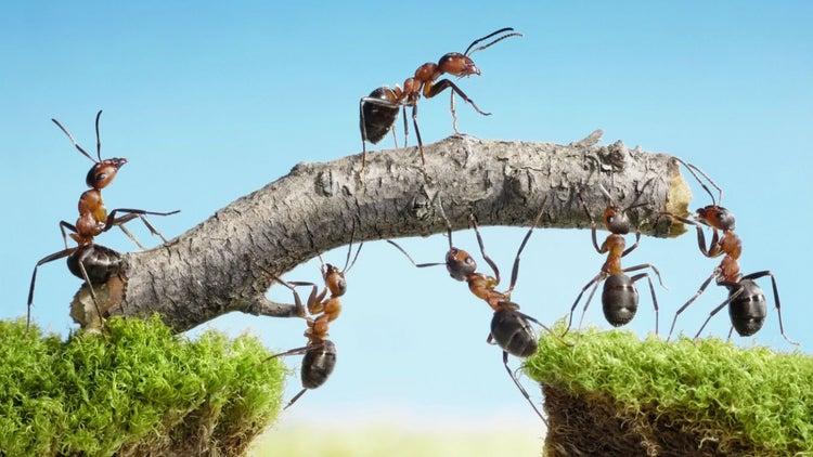 Claves para lograr un equipo de trabajo orientado al éxito