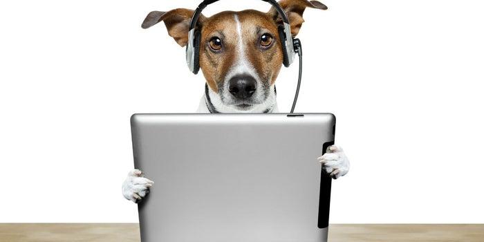 Gadgets para mascotas, el nuevo boom del mercado