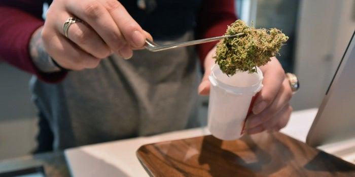 Marijuana Advocates, Your Enemy Has a Name: SAM