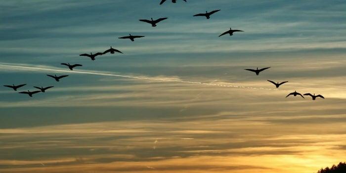 Los 10 mandamientos de un buen líder