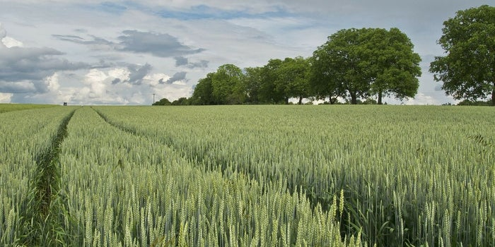 How Technology Can Help Agribusinesses Prosper
