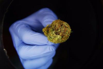 Colorado Study Links Marijuana Legalization to Decline In Fatal Opioid...