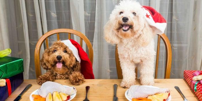 Emprende con cenas de fin de año para mascotas