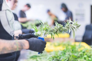 Maine Lawmakers -- and Voters -- Still Hope to Legalize Recreational Marijuana