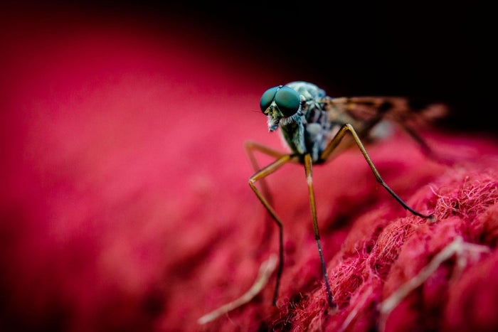 how to make mosquitoes not bite you