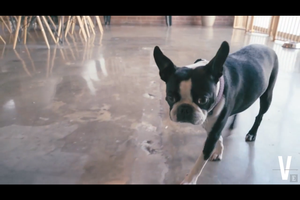 Pets, Surround Sound Speakers and Ping-Pong Tables: Take a Virtual Tour of This Modern Office