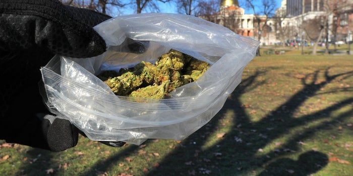 Gimme Shelter: Massachusetts Lawmakers Push to Become a Marijuana Sanctuary State