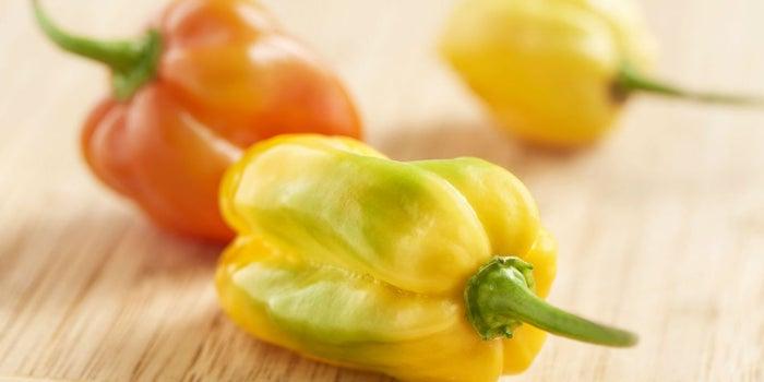 Agrocoin, la criptomoneda para invertir en chiles habaneros