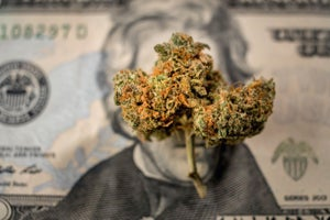 Investment In Marijuana Industry Has Grown 600 Percent so Far in 2018