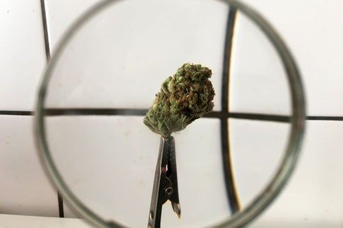 What Better Conditions to Raise Money for Cannabis Businesses Means for Marijuana Entrepreneurs