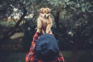 Why the Best Leaders Act Like Playful Puppies