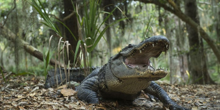 Why I Only Hire People With 'Alligator Blood'