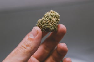 3 Questions to Help You Decide If You Should Open a Cannabis Business