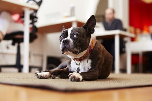 Here are 50 Coworking Locations That Welcome Dogs