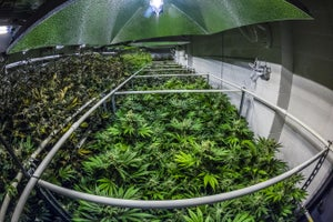 New Numbers Reveal the Marijuana Industry Boom Has Only Just Begun