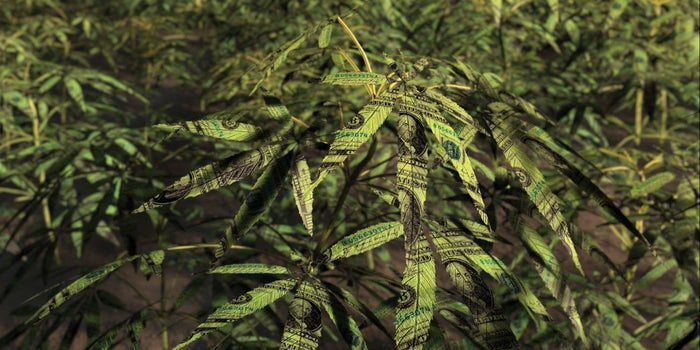 These Are The 4 Big Buzzwords in the Cannabis Industry Right Now