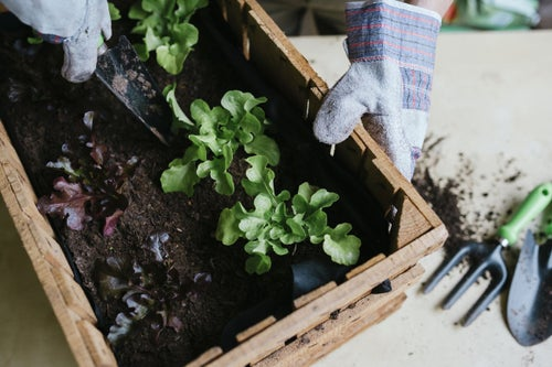 Sowing the Seeds: What Gardening Teaches About Leadership