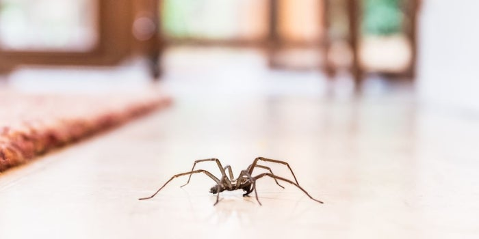 Food Delivery Guy Goes Beyond, Getting Rid of a Spider for a Panicked Customer