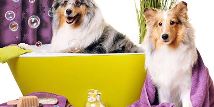 Spa-estética para mascotas