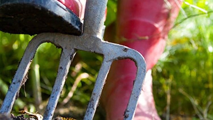 Jardinería ecológica