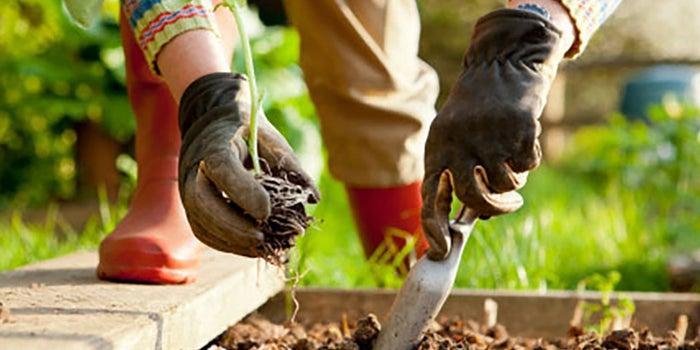 Productos orgánicos para jardinería