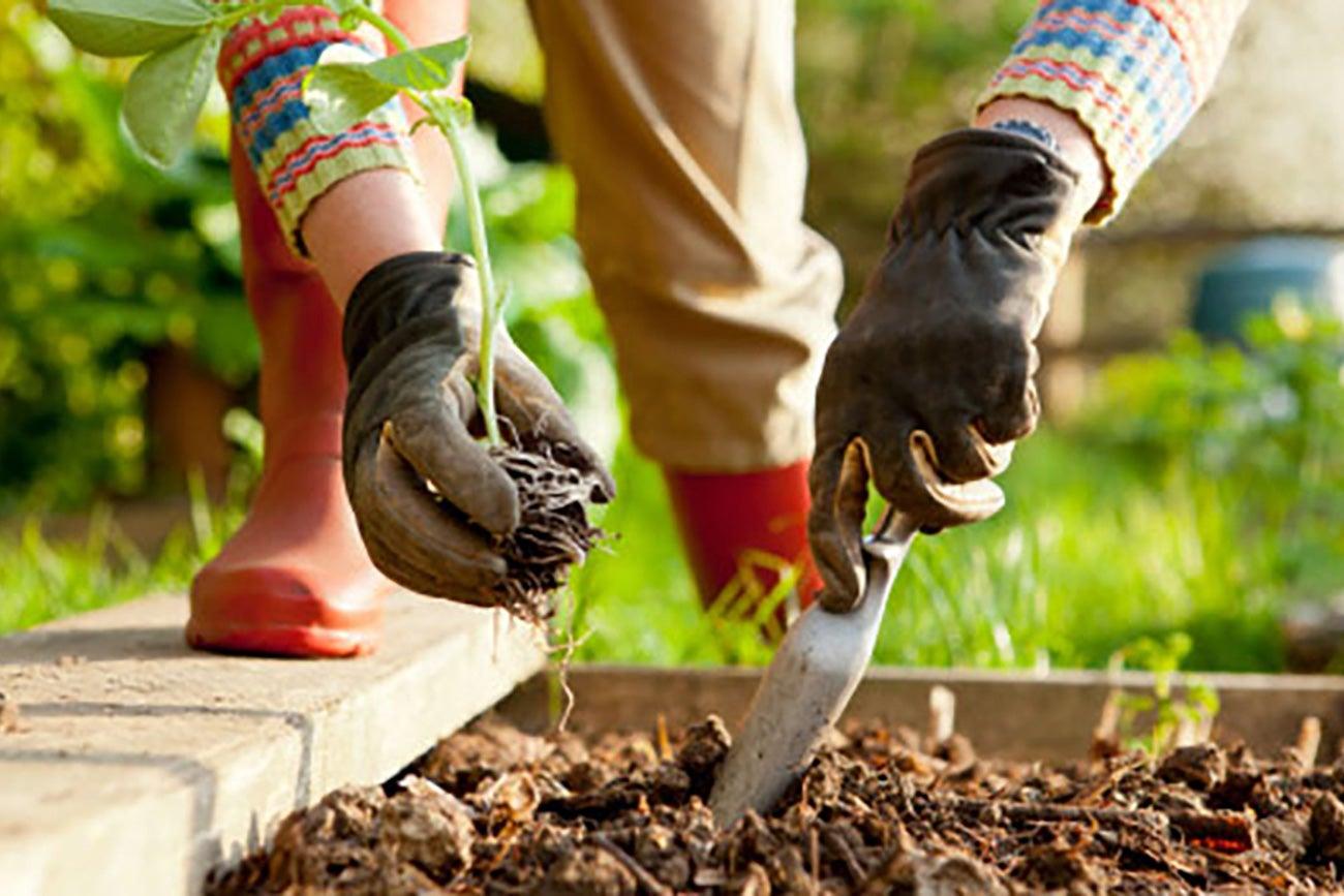productos orgnicos para jardinera