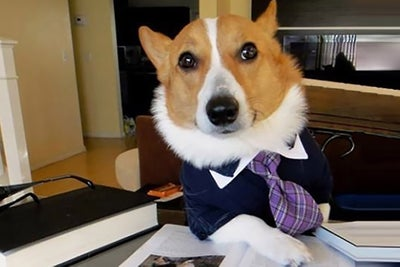 Not Top Dog? 4 Ways to Project a Bigger Brand