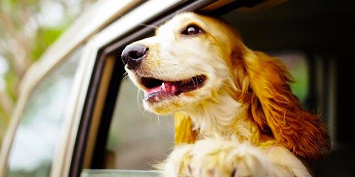 Servicio de transporte para mascotas