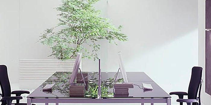 Decoraciones de plantas para oficinas