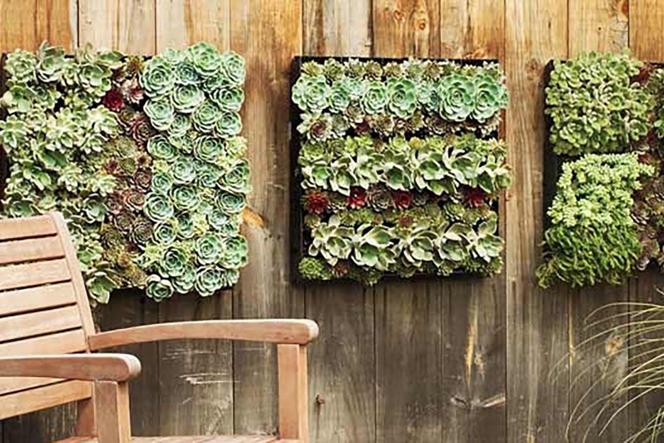 Plantas verticales for Como se construye un jardin vertical